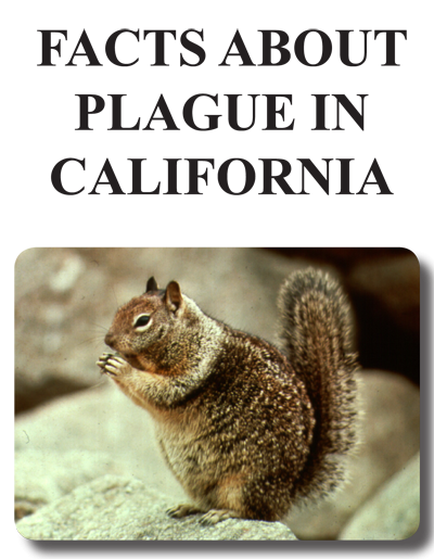 Facts About Plague in CA